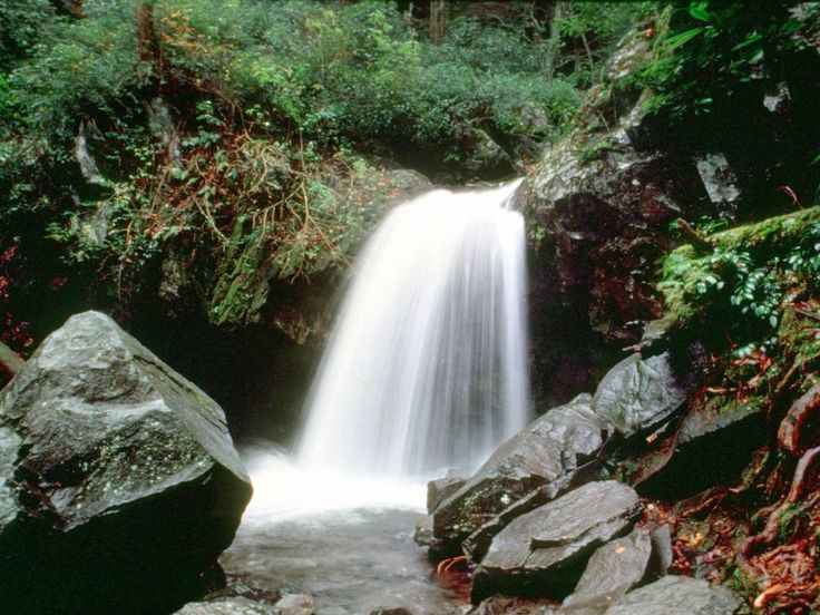 The Great Smoky National Park's more than 85 inches of annual rainfall and…
