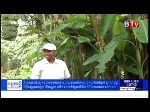 Pineapple Farming | Banana Farming in Cambodia | Khmer Agriculture News,...