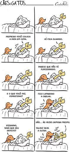 Cães e Gatos – Bom Dia!
