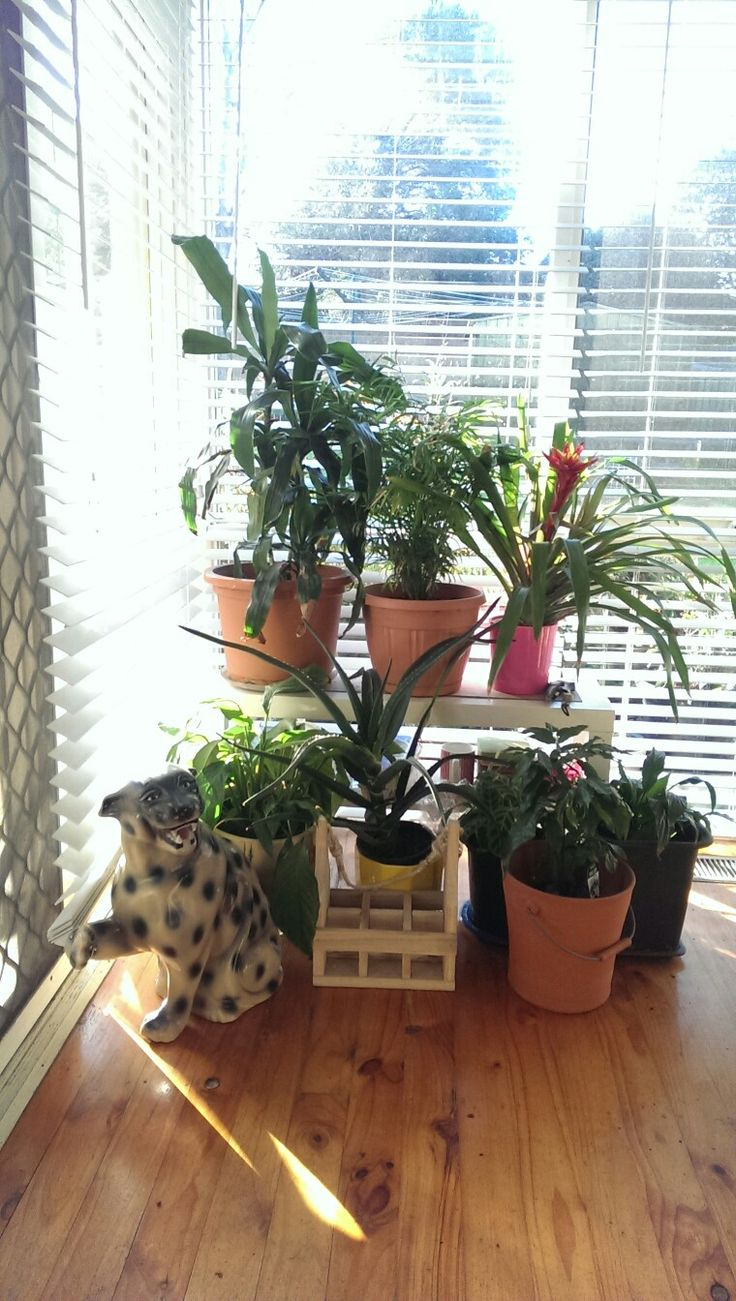 Indoor Garden, Dracaena, Parlour Palm, Guzmania Bromeliad, Lily, Aloe Barberae, Calathea, Magic Bean