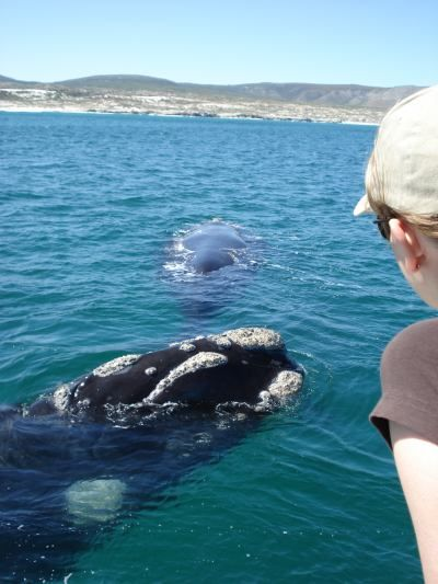 Get up close and personal with the whales at Hermanus in Cape Town. Find the tour package here: http://www.african-outposts.com/packages/detail/news/cape-town-private-scenic-tours/