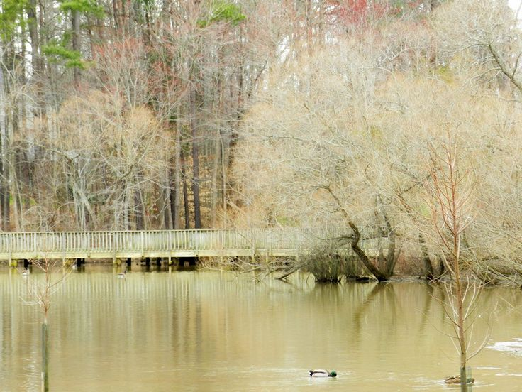 Last day of February, Lake Lynn, Raleigh, NC