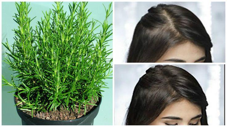 Te apuesto a que seguro tienes esta hierba en el jardín y no sabes que cura la calvicie!! – Viviendo Saludable