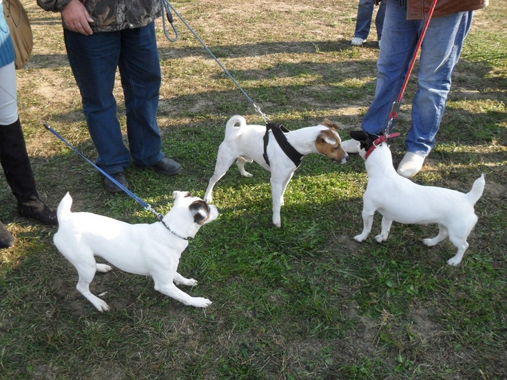 Rocco / JRT   - and friends