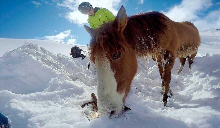 Ele foi praticar snowboard e se depara com um cavalo preso no gelo. Veja o incrível e caótico resgate