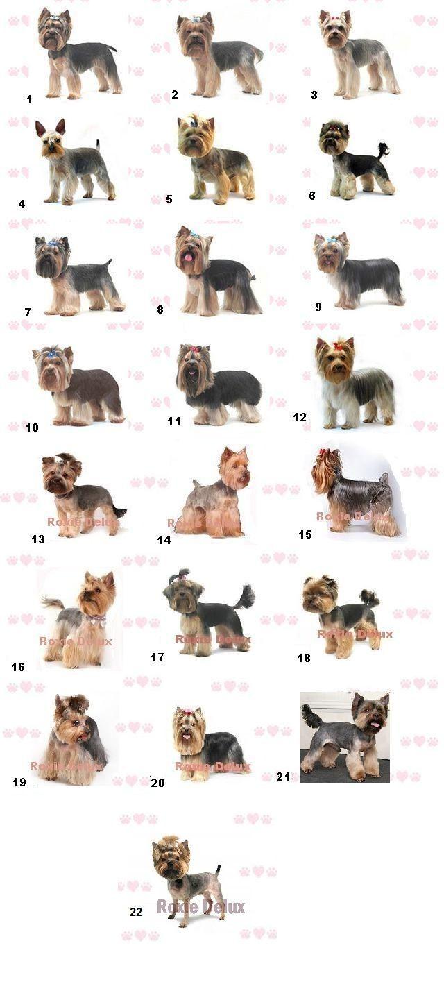 Peluquería Canina: más de 20 maneras diferentes de cortar el pelo a un Yorkshire Terrier