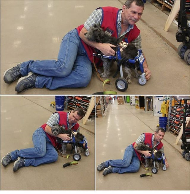 This is Andy. He works at the Lowes in Wilkesboro, NC. In the wheelchair is our rescue pup, Baxter. A couple weeks ago, my best friend and I took Baxter's cart to Lowes to find the correct hardware so we could attach an anti-tip rear wheel to Baxter's cart. We ended up at the project desk asking for someone who had imagination and could think outside the box. They called our new friend, Andy. Andy sat on the floor with us in the hardware department for a good hour, helping us. We left with a…