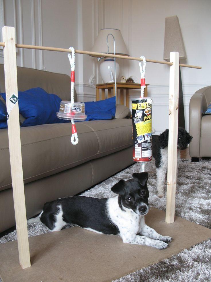 Glockenspiel für Hunde (Intelligenzspiel)