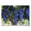 John 15:5 I Am the Vine......