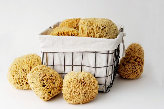 Extra Large All NaturaL Sea Sponge