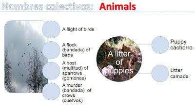 Nombres colectivos de animales en inglés