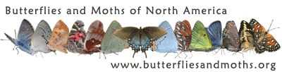 Where can I find butterflies and moths? | Children's Butterfly Website