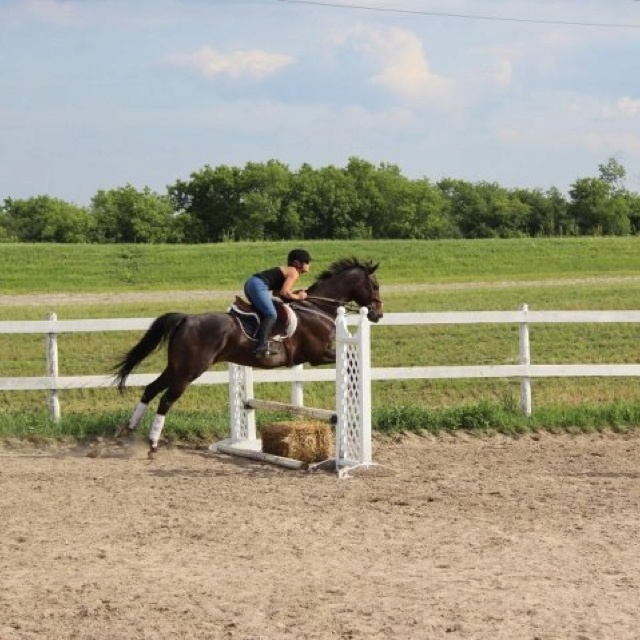 Affair to Remember - lease Info@bellewoodequestrian.com