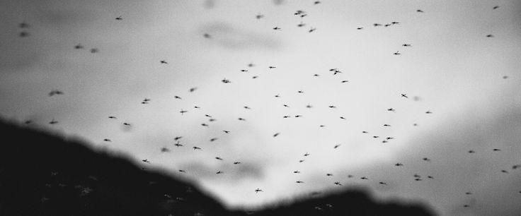 Winged Migration. Photo by logan adermatt