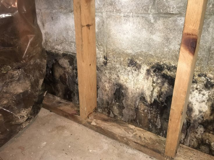 How to Remove Mold From Concrete Patio in 2020 Mold on