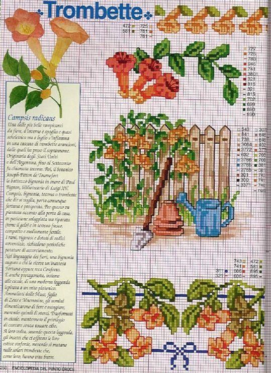 Gallery.ru / Фото #79 - Ботаника-цветы - irislena