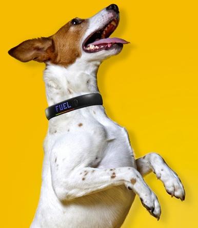 Controla el ejercicio de tu perro con Nike Fuel Band