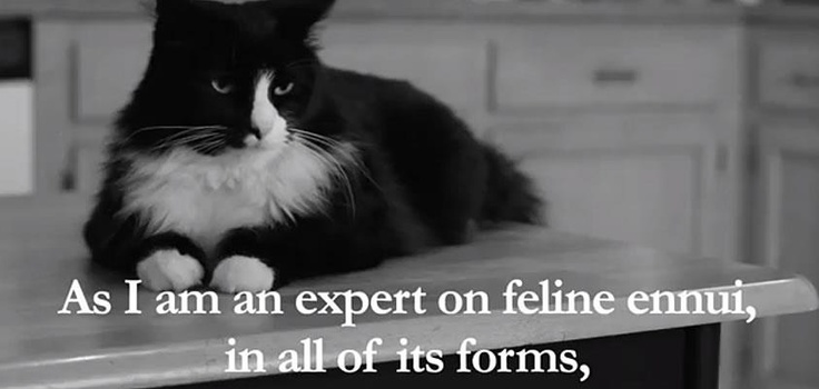 Henri, Le Chat Noir IS an expert on feline ennui