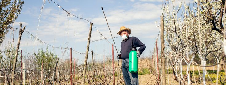 Here's Why Your Organic Wine Is Actually Really Bad For The Environment | VinePair #wine #wineeducation #organic