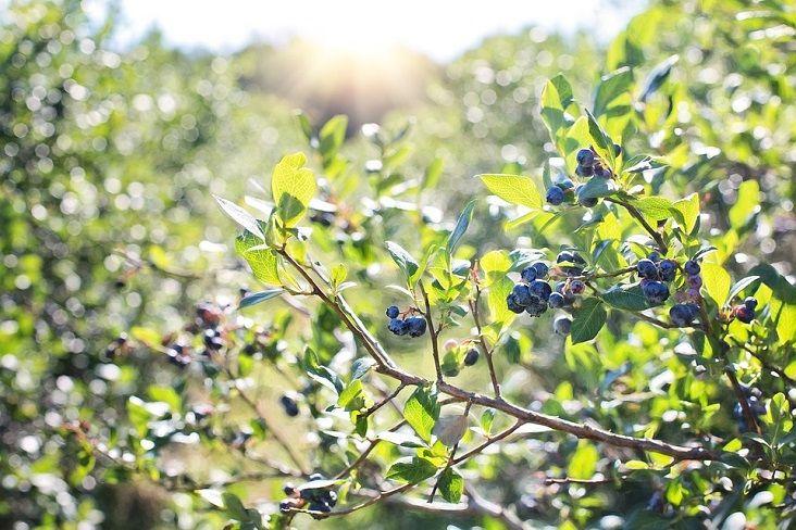 Best DIY Fruit Picking Sites in Atlanta