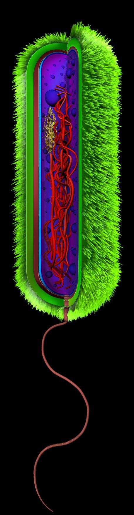 Vibrio cholerae by icaroGraf on deviantART