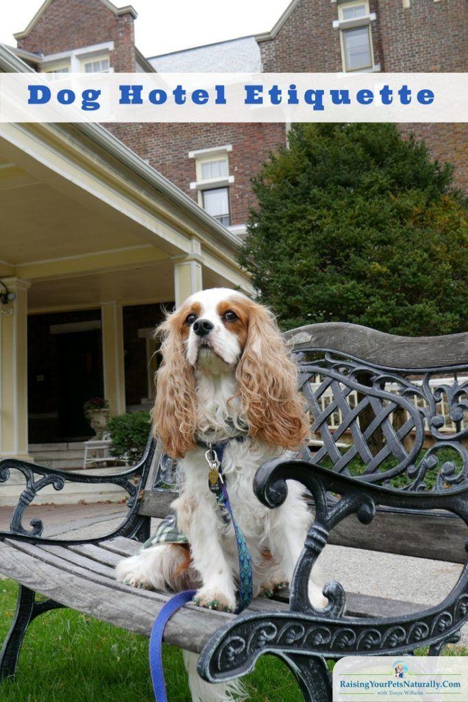 Dog Friendly Vacations Pet Friendly Hotels Dog Friendly Vacation Dog Friendly Hotels Pet Friendly Hotels