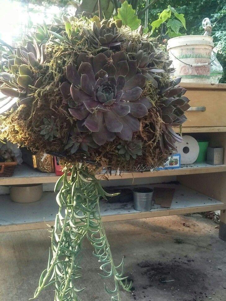 1000+ images about Succulent pot ideas on Pinterest   Head ...
