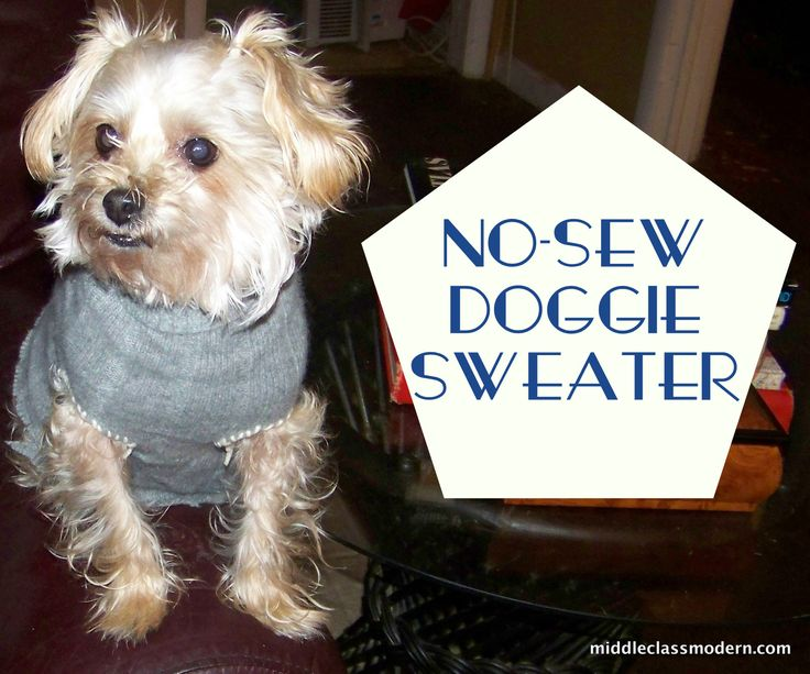 No Sew Dog Sweater