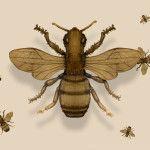 aranżacja wnętrz tapeta z owadami