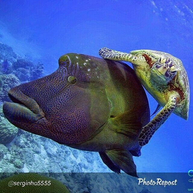 269 best images about ocean on pinterest colorful fish for Ugly fish pictures