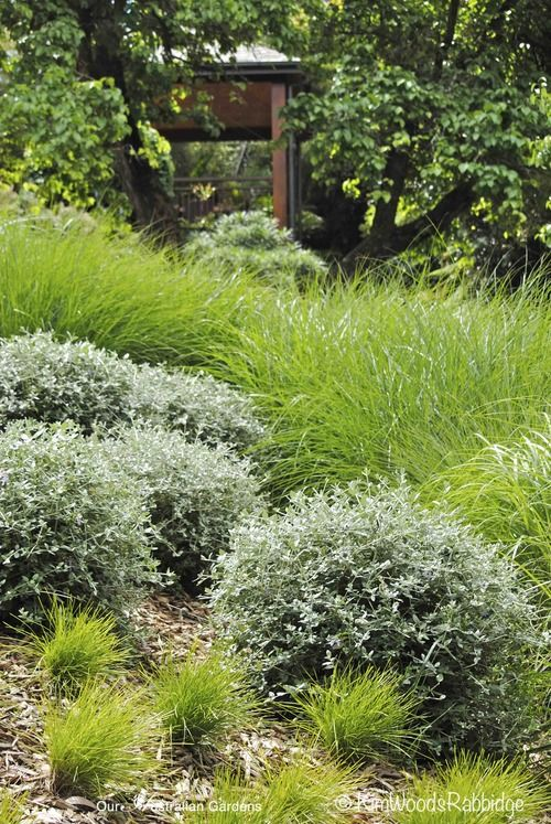 Undulations of lomandra 'Little Con', Miscanthus sinensis (grass with feathery spikes) and perennials, such as trimmed teucrium, cover the hillside