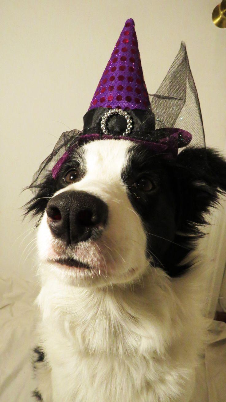 Lizzy ya está preparada para celebrar Halloween Permanece atento a los concursos y promociones que tenemos preparadas para celebrarlo.