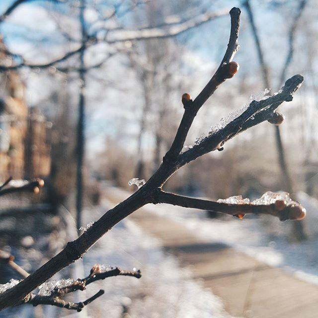 Доброго субботнего☕ Март как всегда не предсказуем... А уже очень давно хочется тепла и солнца, а ещё листиков, цветочков! Но не смотря на всё это как же красиво было утром! Всё искрилось и блестело в лучах утреннего солнца. У природы нет плохой погоды. А у меня в работе два палантинаи всего две руки( Всем лучей добра и чудесных выходных  #доброеутро #весна #март  #природа #погода #фото #фотонателефон #красотавокругнас #вязание #вяжуспицами #Пушкино #Подмосковье #Московскаяоблость…