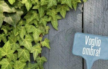 Oltre 25 fantastiche idee su piante da ombra su pinterest - Piante da interno poca luce ...