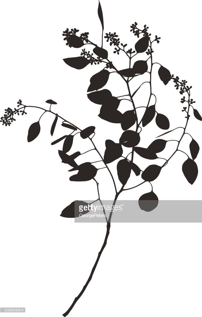 Silhouette Of Eucalyptus Stem Leaves And Buds Vector Id838809914