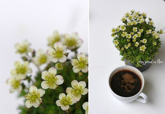 Jurnal cu flori: Ce mai citesc zilele astea