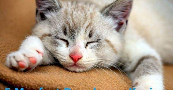 Efek Terapi Dengkuran Kucing Mampu Sembuhkan Berbagai Penyakit