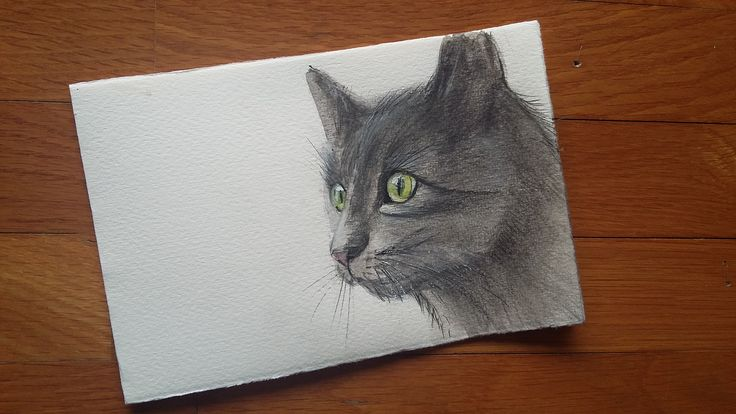 Gatto nero  -  acquerello e matite