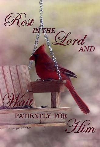 Wait on the Lord.  ♥ 37th Psalms
