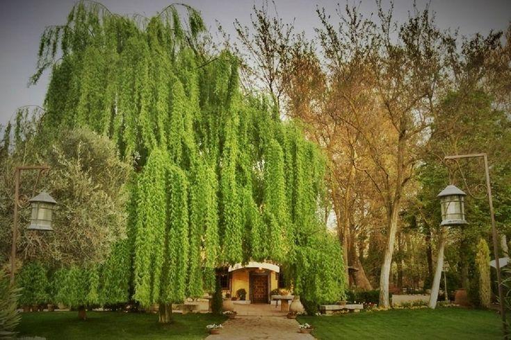 tu boda en el bosque encantado de Madrid - edisee - edisee