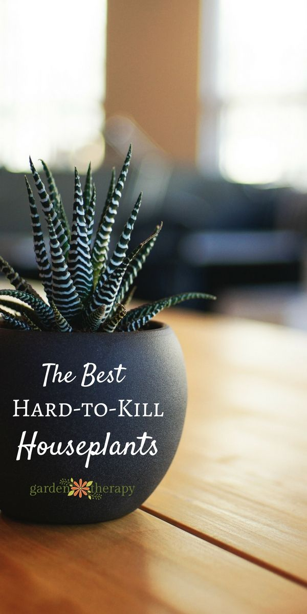 Do you love the idea of indoor plants but find that every time you try to take care of one, it slowly (or perhaps quickly) dies on you? Lots of people experience this and simply give up on having houseplants, but don't despair! Even black thumb gardeners can keep these hard-to-kill indoor plants healthy and happy because they require almost no care. #sponsored