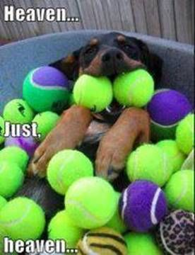 dogs and their balls