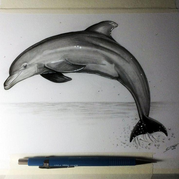Dolphin Drawing Study by LethalChris.deviantart.com on @DeviantArt