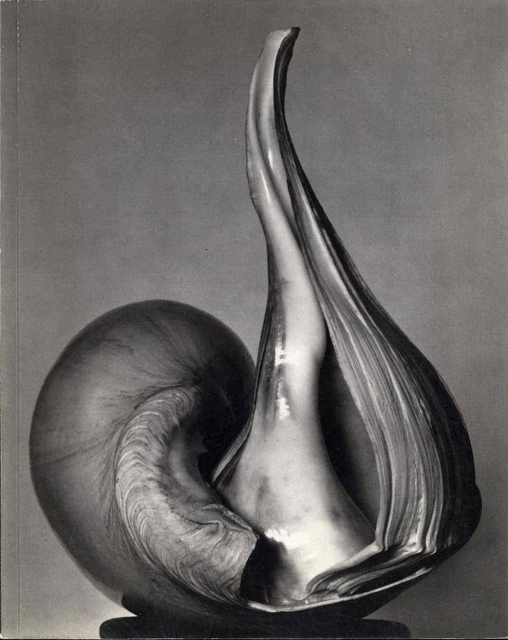 Edward Weston - Conchiglia (1927)