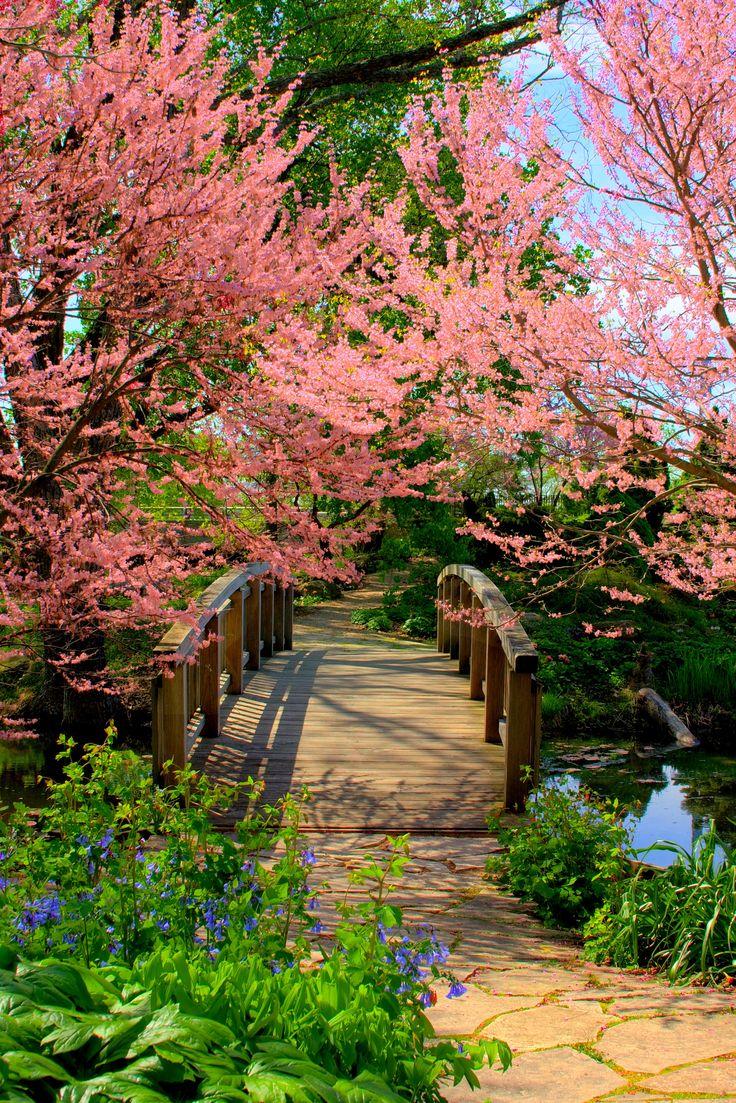***Olbrich Gardens bridge in spring (Madison, Wisconsin) by Brian L.