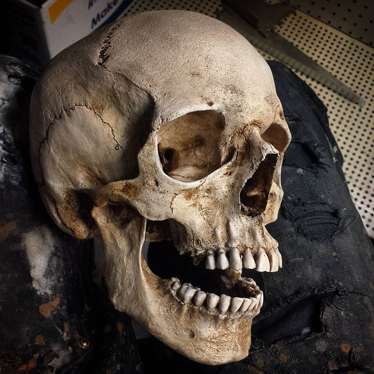 27 Best Skull Images On Pinterest Skulls Skull Art And Skeleton