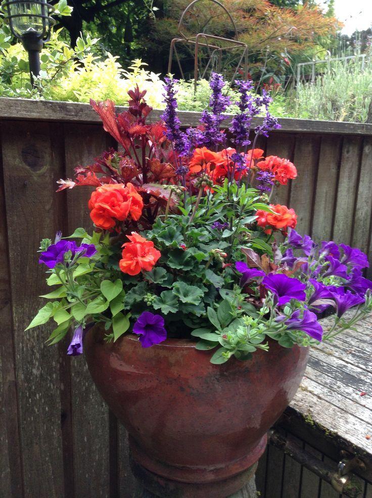 Love Those Bright Colors Coleus Henna Purple Annual Salvia Orange Z Container Gardening Flowers Colorful Planters Porch Flowers