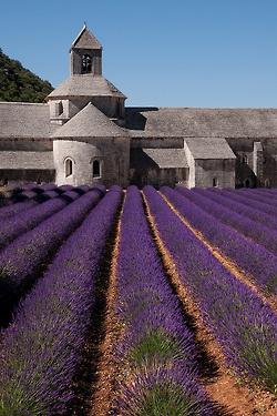 Sénanque Abbey, Gordes | France (by franc/34)