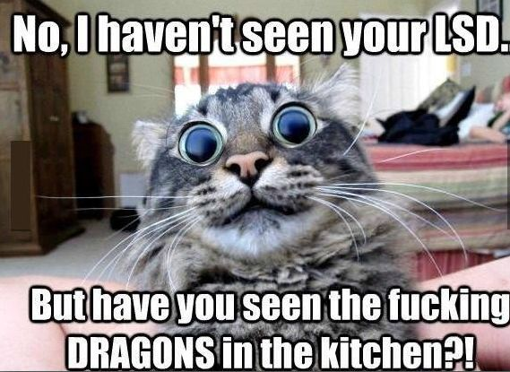i don't  usually find cat memes funny, but when i do..the cats are high