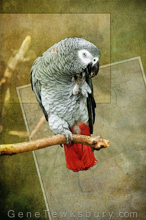 147 best images about Bird parrot on Pinterest